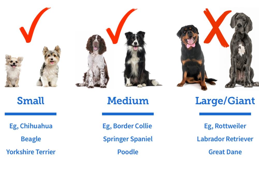 Pets sized